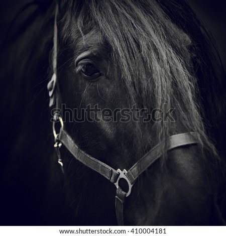 Black-and-white image of a muzzle of a black horse close up. - stock photo