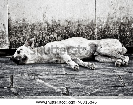Black and white image of an abandoned homeless stray dog sleeping on the street - stock photo
