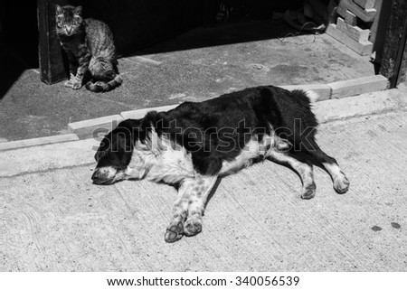 Black and white image of cat and dogs on the streets of Valparaiso, Chile - stock photo