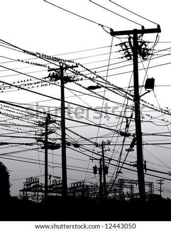 Black White Image Electric Wires Poles Stock Illustration 12443050 ...