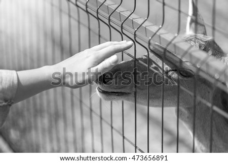 Black and white image of hand caressing deer through metal fence in the zoo