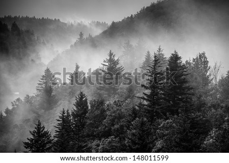 Black and white image of the clouds flowing through the pine trees along the Blue Ridge Parkway in Western North Carolina. - stock photo