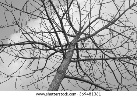 black and white image of thorny tree without leaves
