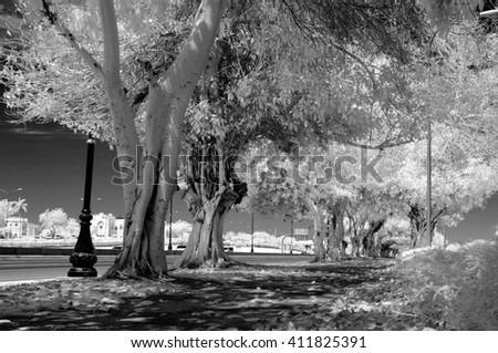 Black and white infrared image of a sidewalk alongside a tree lined empty road - stock photo