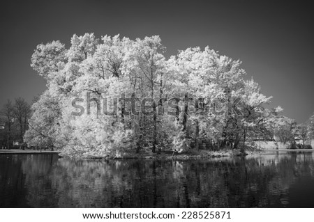Black and White infrared trees - stock photo
