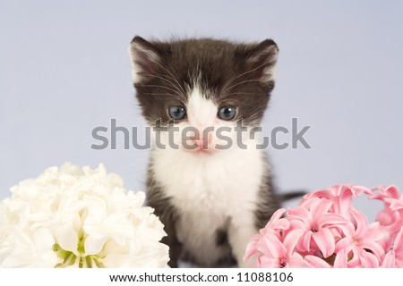 black and white kitten and two flowers,  isolated