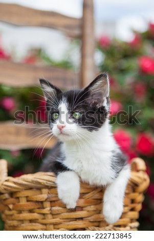 Black and white kitten in a basket