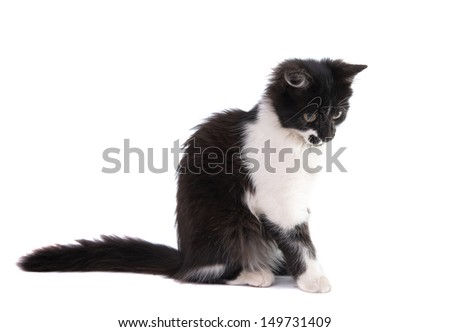 black and white kitten isolated on white background - stock photo