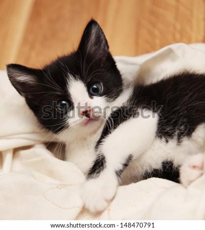 Black and white kitten laying down - stock photo