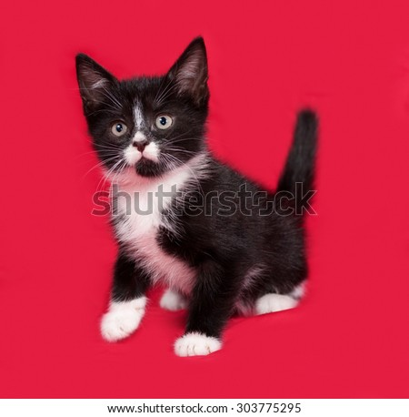Black and white kitten sitting on red background - stock photo
