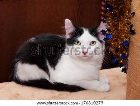Black and white kitten with green eyes sits amid cabinet - stock photo