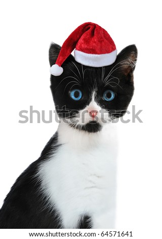 Black and white kitten with red Santa Claus cap on white background. - stock photo