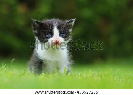 Black and white kitty - stock photo