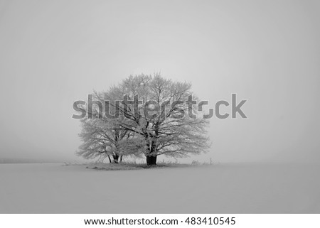 black-and-white landscape with a large snow-covered trees in the fog, standing in the field