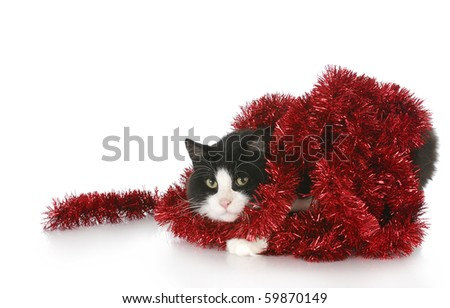 black and white long haired cat tangled up in christmas garland with reflection on white background
