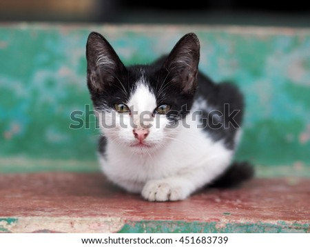 black and white lovely lonely cute young tiny cat on the floor outdoor with home surrounding background under natural sunlight portraits view closeup looking at camera  - stock photo