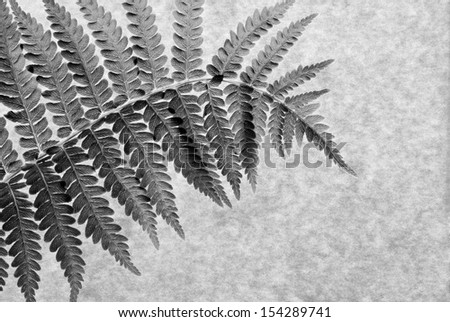 Black and white macro of real fern leaf on parchment paper. Back lighting shows texture and details. - stock photo