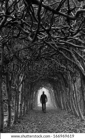 Black and white of a man walking in a tunnel of trees on a foggy, autumn day. - stock photo