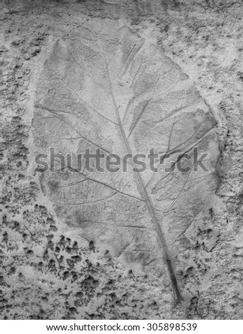 Black and white of Leaf on cement texture background - stock photo