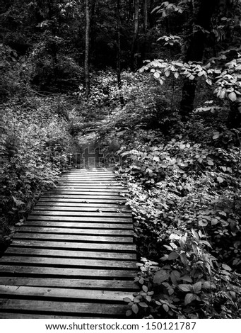 Black and white photo of a boardwalk trail and lush spring forest in Codorus State Park, Pennsylvania.
