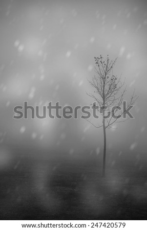 Black and white photo of a lonely tree at winter