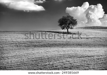 Black and white photo of a lonely tree on the hill, beautiful cloudy sky, wonderful natural landscape, conception of solitude, Tuscany, Italy - stock photo