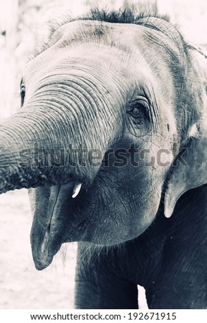 Black and white photo of baby elephant - stock photo