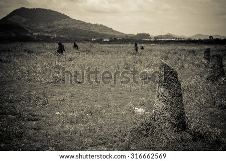 black and white photo of deforest wide area - stock photo