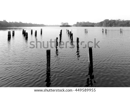 Black and White photo of the big lake, trees on small island at sight, many stump above the surface with wave blow little wind, natural scene. - stock photo