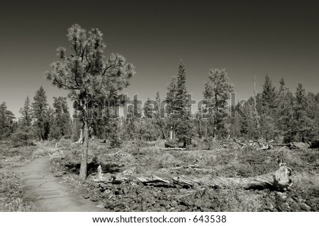Black and white photo of the Lava Cast Forest, Newberry National Monument, near Bend, Oregon, USA - stock photo