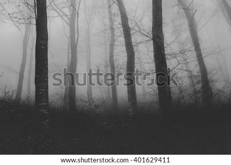 black and white photograph of a weird foggy forest