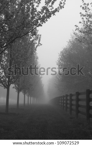 Black and white photograph of morning fog on road with line of blossoming trees and fence; - stock photo