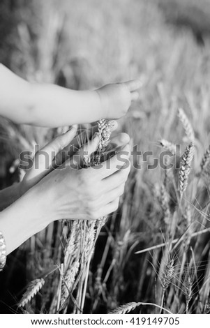 Black and white photography of harvest concept, hands touching wheat ears in field on sunny day - stock photo
