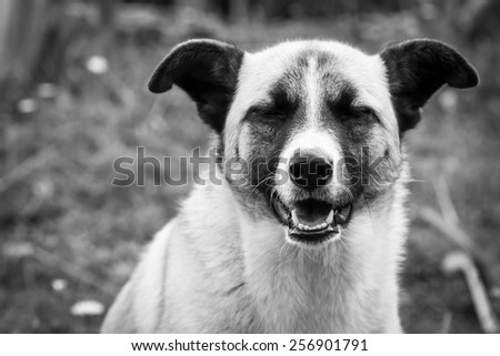 Black and white picture of a dog with a relaxed expression  - stock photo