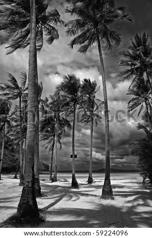 Black and white picture of palm trees on a beach in Thailand - stock photo