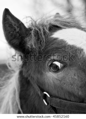 Black and white portrait of horse head with big eyes - stock photo