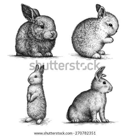 Black and white rabbit isolated. Engraving sketch. - stock photo
