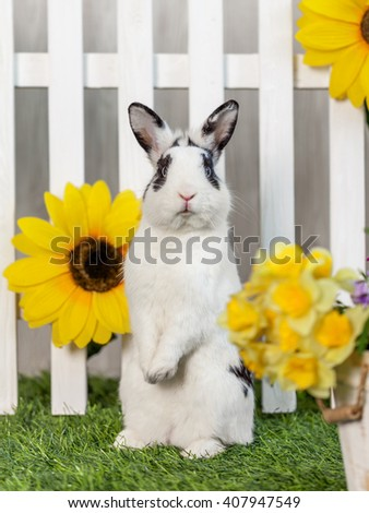 Black and white rabbit on the grass near the fence with flowers - stock photo