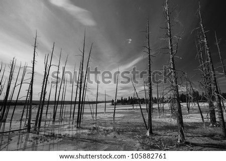 Black and white scenery and forest fire - stock photo
