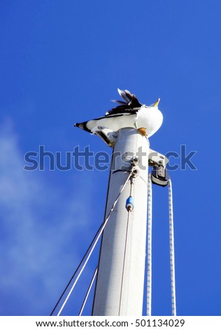 Black and white seagull perched high on mast of boat