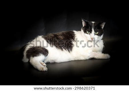 Black and white short haired cat, on a dark background.