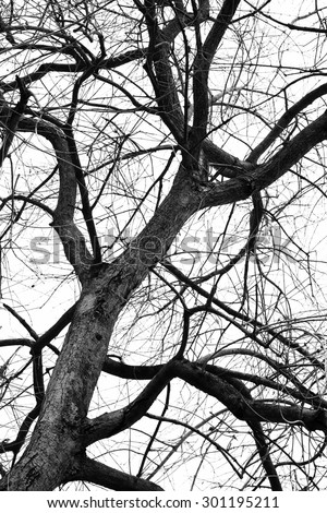 Black and white silhouette tree branches for abstract art photography in nature concept - stock photo