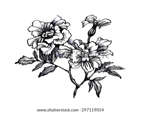 Black white sketch painting beautiful flowers stock illustration black and white sketch with painting beautiful flowers illustration mightylinksfo