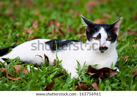black and white stray cat playing in public park - stock photo
