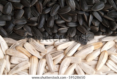 black and white sunflower seeds - stock photo