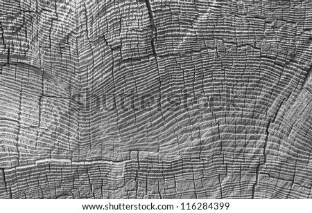 Black and white texture of tree stump - stock photo