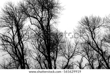 Black and white tops of bare trees in the woods reaching upward and branching out against an overcast sky