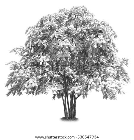 Black and white tree isolated 3d illustration high quality