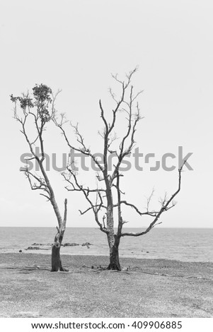 black and white Tree Standing on the Beach