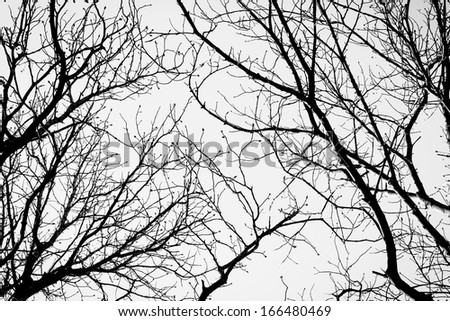 black and white trees silhouettes on sky background - stock photo